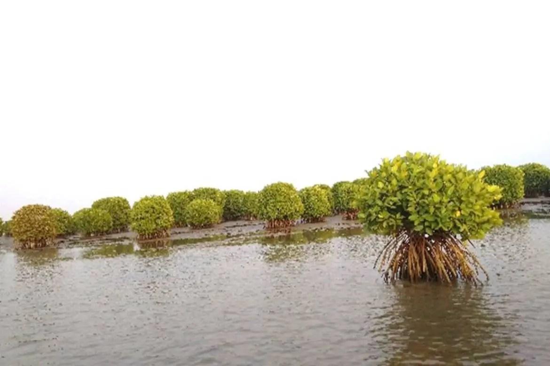 Kerala mangrove