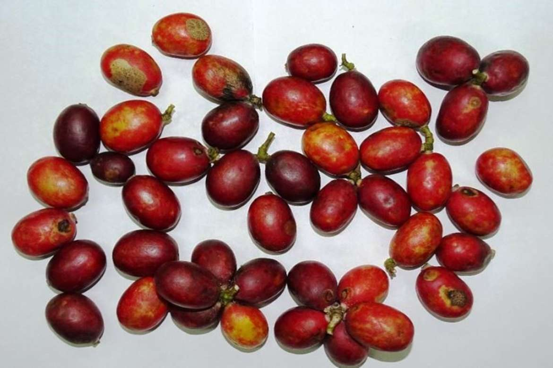Freshly harvested fruits