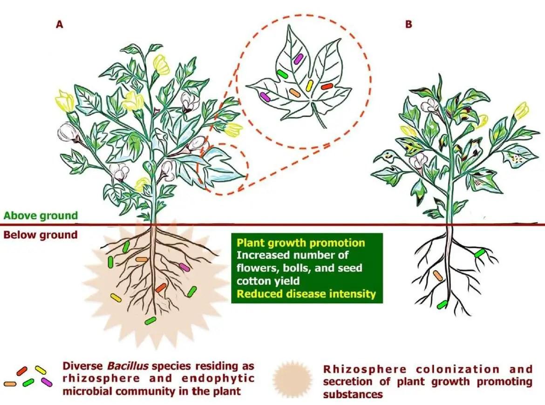 bioformulation