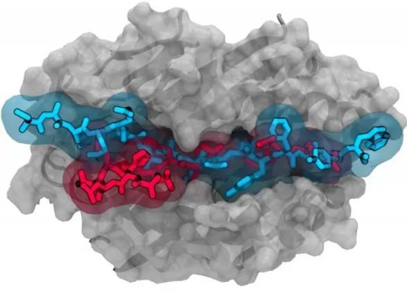 immune cell