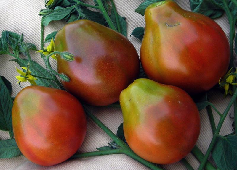 Japanese Black Trifele Tomate
