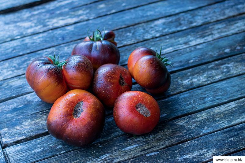 Ananas blue Tomate
