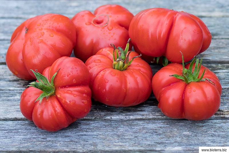 Ficarazzi Tomate