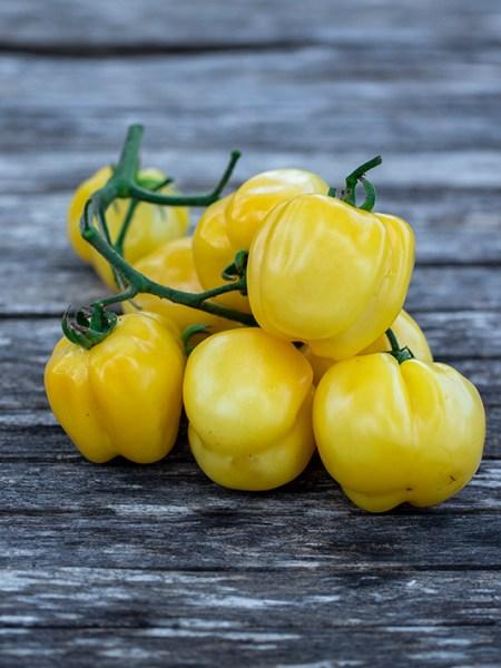 Yellow Stuffer Tomate