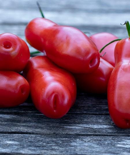 "Smiley Worms ""Casanova"" Tomate"