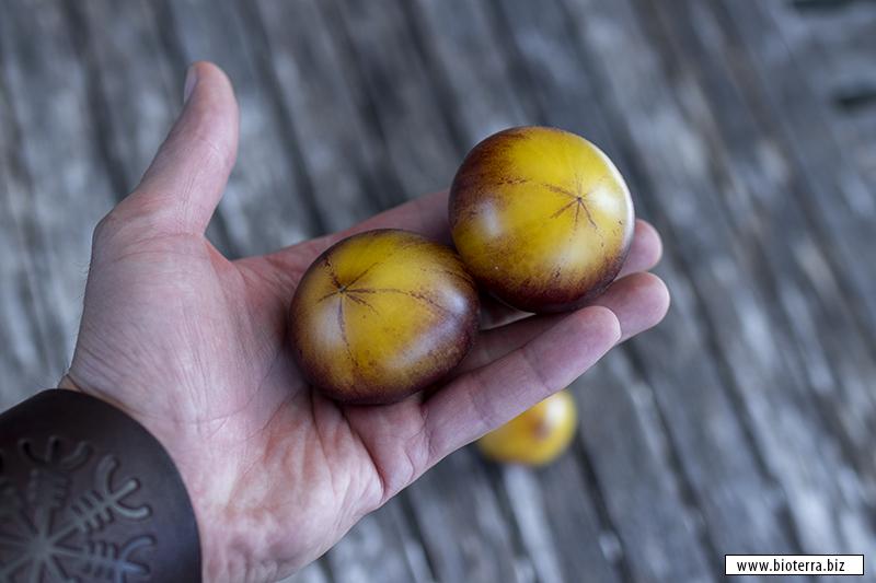 Great White Purple Tomate