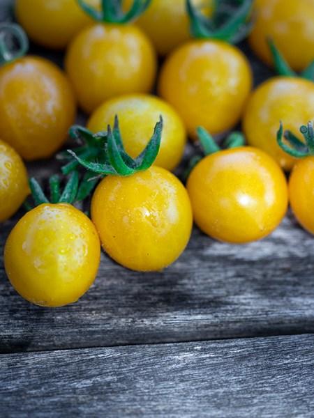 Cherrytomate Yellow Clementine