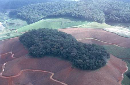Fragments of Atlantic Forest in Northeastern Brazil (photo by Antonio Aguiar Neto)