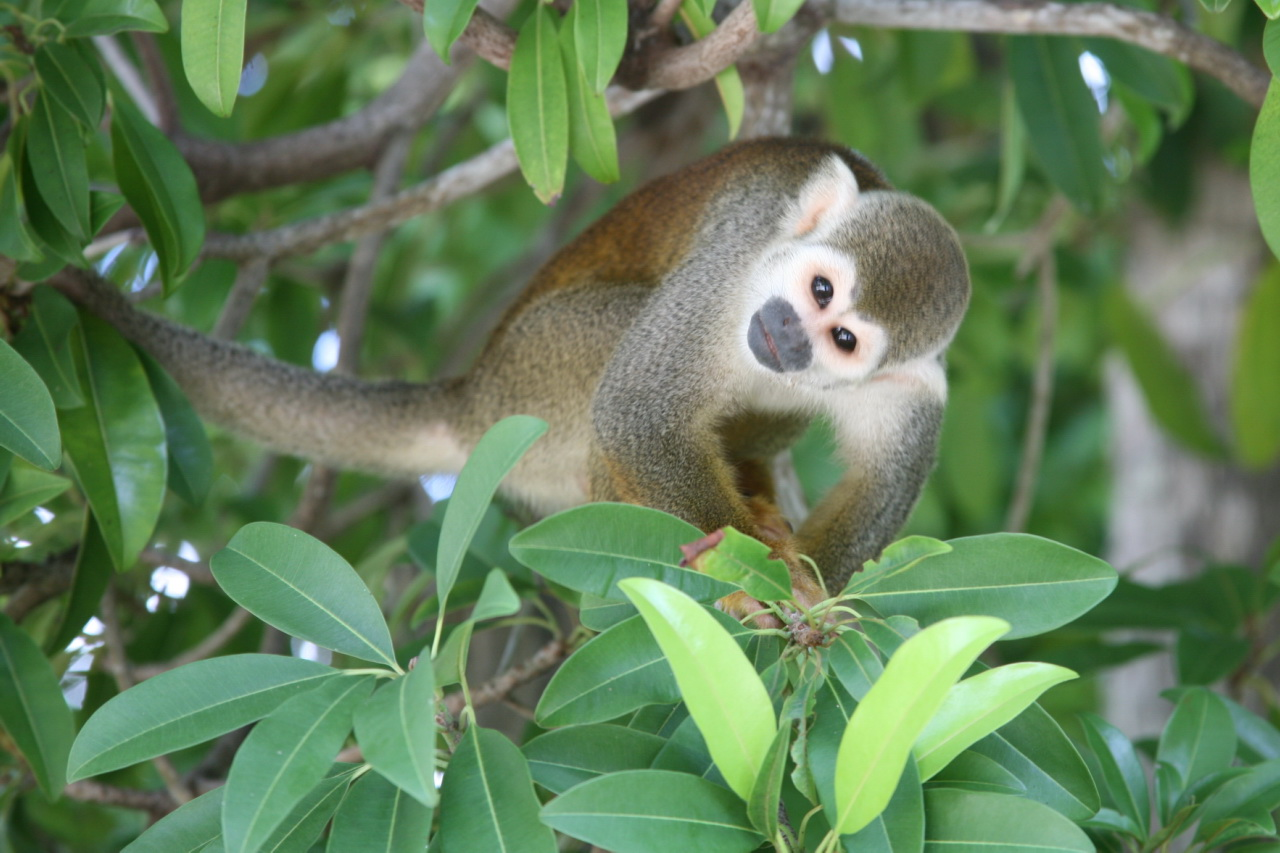 Squirrel monkey (photo by Cliff)