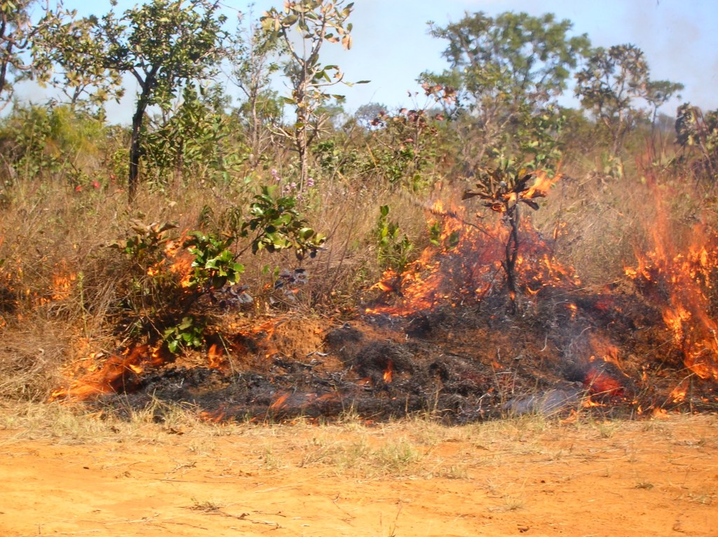 Salazar & Goldstein 2014. Late-dry season fire spreading over grasses and woody species in the savannas of Central Brazil (Photograph by Ana Salazar).
