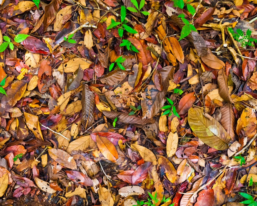 Fig, 3. A chemically diverse tropical rainforest litter layer.