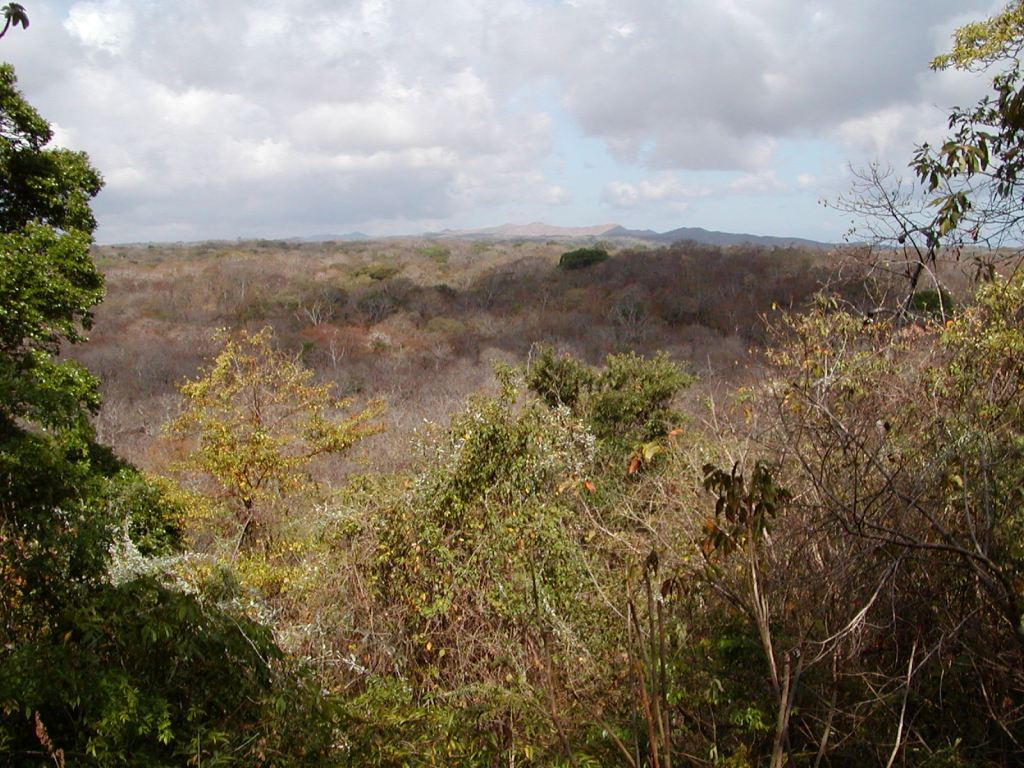 Tropical dry forests in the Área de Conservación Guanacaste, Costa Rica.  Unlike rainforests, these forests experience a 5-6 month dry season from December to May, during which the majority of tree species lose their leaves.  . This photo was taken in the dry season (December–May).   Photo credit: Jennifer Powers.