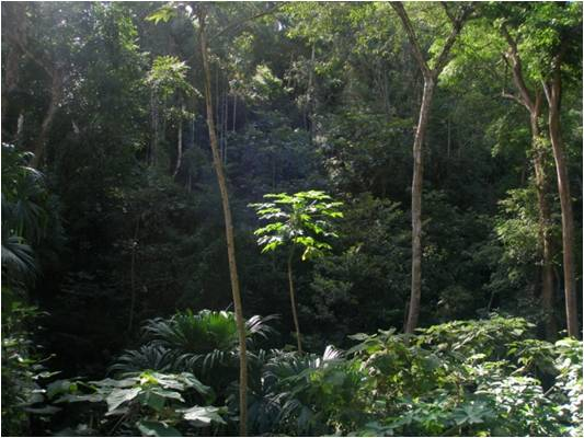 La Tronosa Forest Reserve (Photo: Beatriz Nieto Ariza)