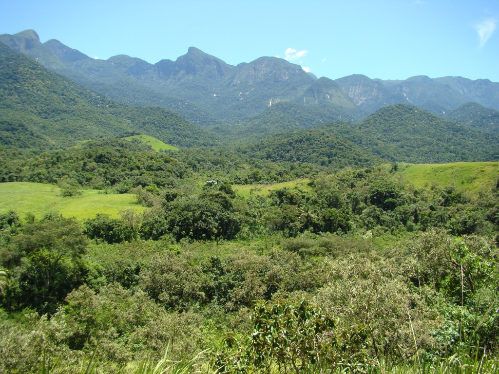 View of continuous forest (Photo by M. Almeida-Gomes)