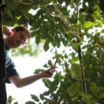The first author, James Smith, prepares to release a dipterocarp fruit from a tree tower in Danum Valley, Malaysian Borneo. Dipterocarp fruit were experimentally released to measure their terminal velocities (rate at which the fruit descends through the air column). We regressed species terminal velocity against fruit wing-loading (fruit mass divided by wing area), generating a model from which terminal velocities of dipterocarp fruit can be predicted from their morphological dimensions.