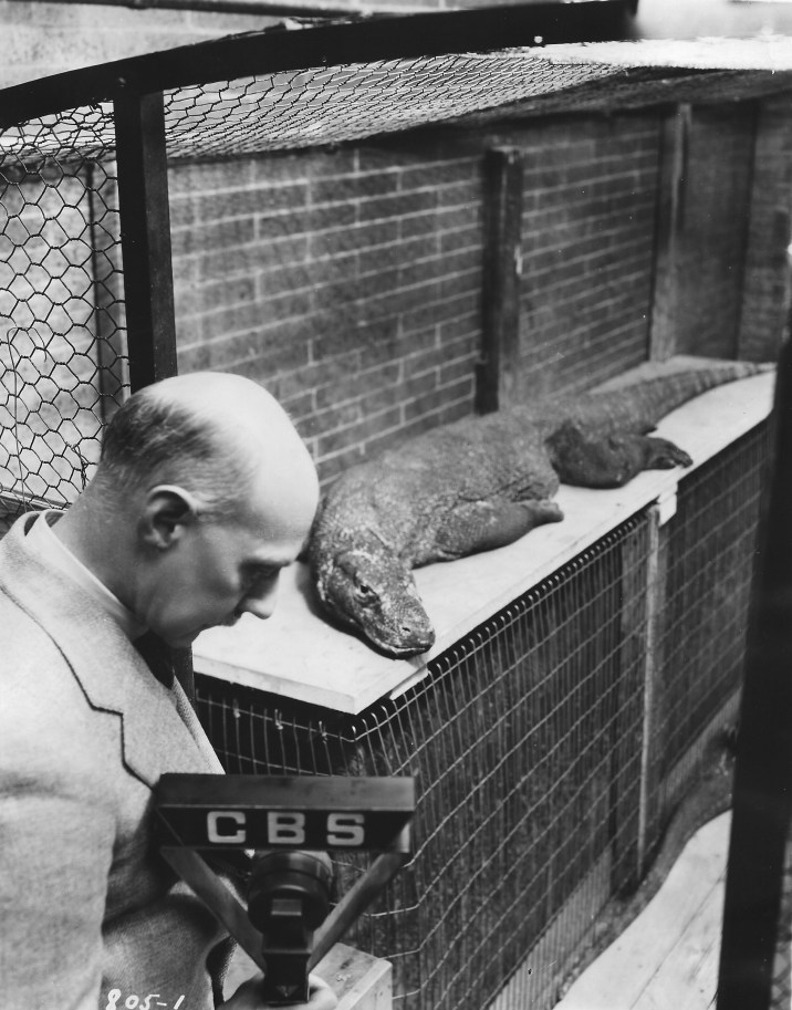Raymond Ditmars with a Komodo dragon, 1934 (Courtesy of Mike Dee)