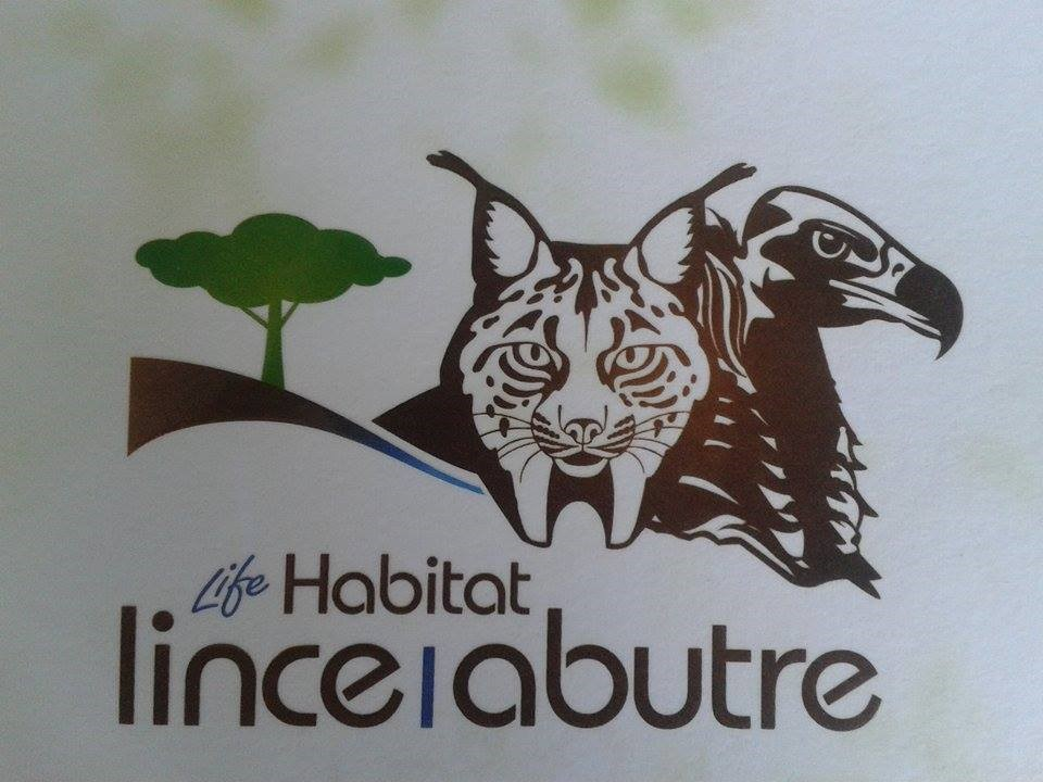 LPN project LinceAbutre aimed to conserve the Iberian lynx Lynx pardinus and Eurasian black vulture Aegypius monachus. Photo by Sophie May Watts
