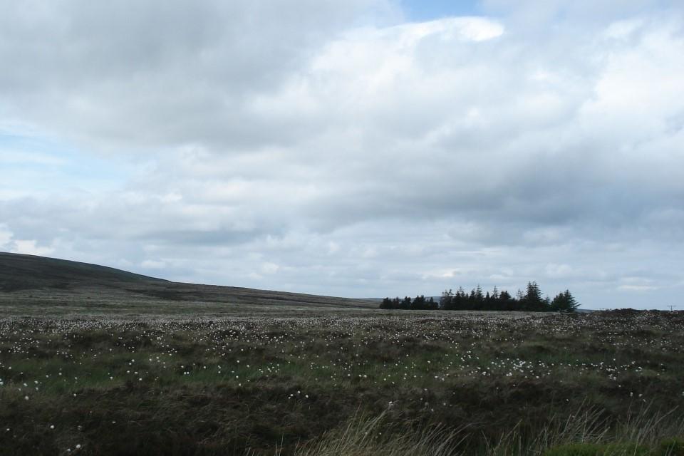 Photo Florence Renou-Wilson showing a blanket bog in Ireland