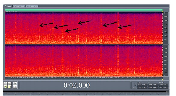 Figure 3. A spectrogram, which shows the clicks of a sperm whale. These are vocalizations that are used by the animals for echolocation in order to detect their prey and navigate in deep waters.