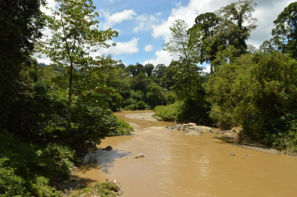 Sunny skies over the serene Segama River that courses through Danum Valley