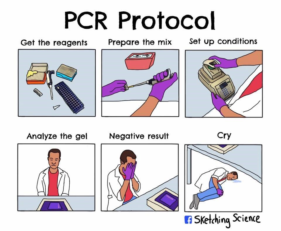 A depiction of the steps in the End-Point PCR process in global laboratories.