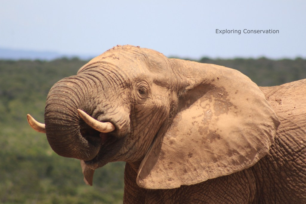 0d0fbae6f987af Safeguarding our Ivory – what will it take  - BioWeb.ie
