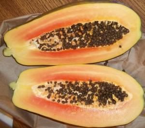 Carica papaya  Reproduction