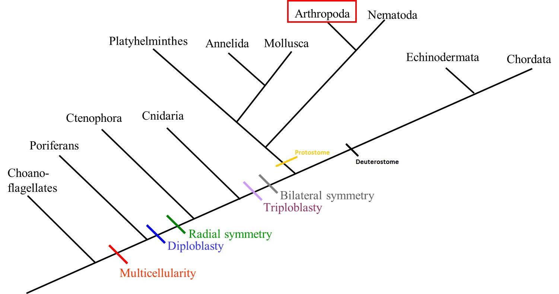 Squilla Mantis Classification