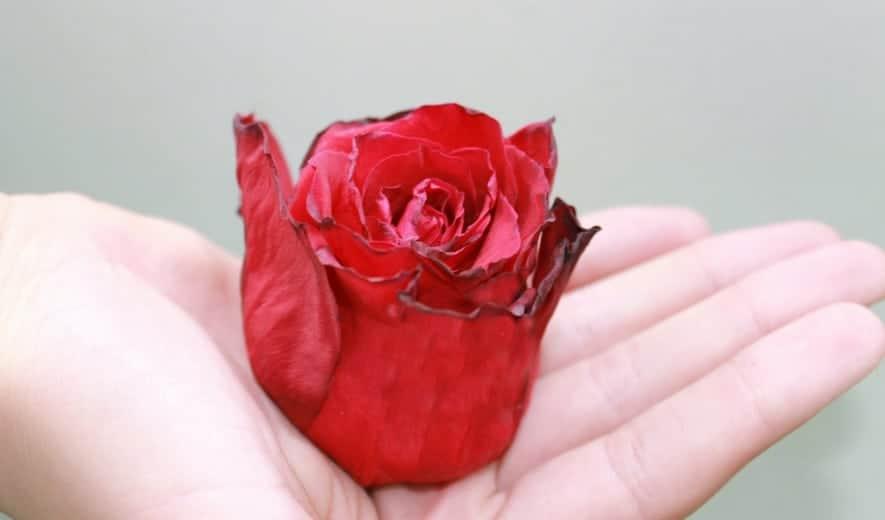 Efectos de la menopausia y de la andropausia