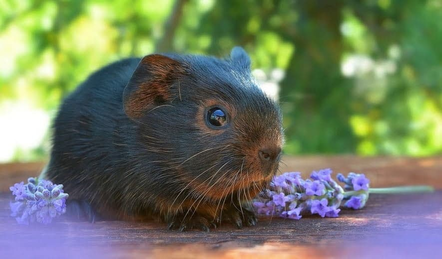 Cosméticos no testados en animales