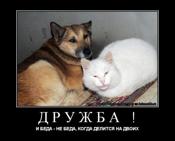 Прикольные картинки про дружбу с надписями (54 фото ...