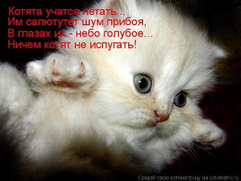 Cамые прикольные картинки про котят (39 фото) • Прикольные ...