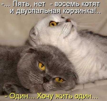 Прикольные картинки про животных коты (65 фото ...