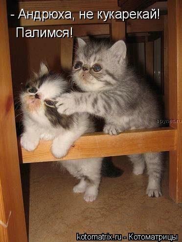Картинки про кошек и котят прикольные (35 фото ...