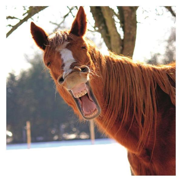Прикольные картинки про коней (69 фото) 🔥 Прикольные ...