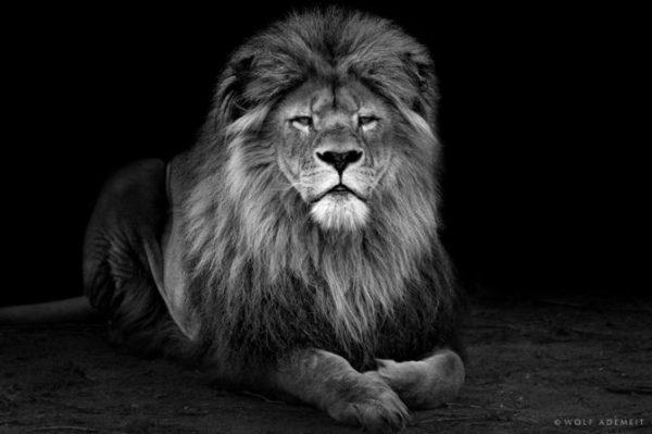 Красивые черно-белые картинки (44 фото) • Прикольные ...