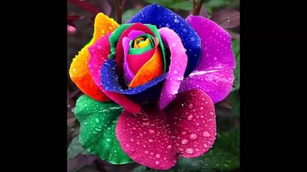 Красивые картинки цветы (39 фото) • Прикольные картинки и юмор