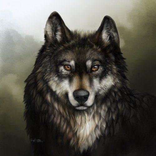 Красивые картинки волки (40 фото) • Прикольные картинки и юмор