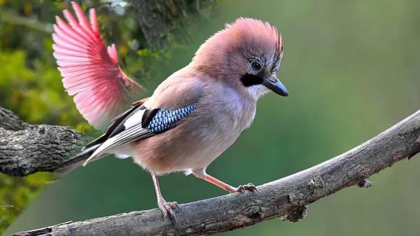 Картинки красивые птицы (35 фото) 🔥 Прикольные картинки и юмор