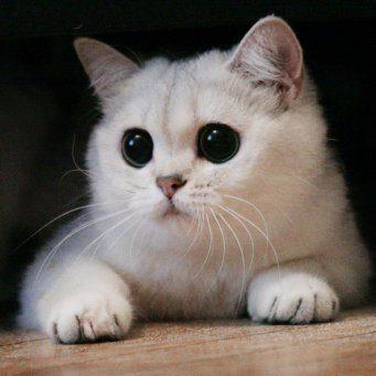 Красивые картинки котов (35 фото) • Прикольные картинки и юмор