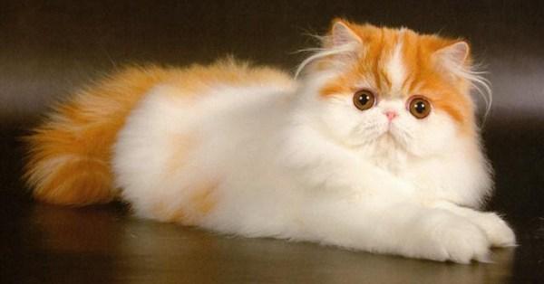 Картинки красивые котики (35 фото) • Прикольные картинки и ...