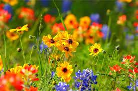 Красивые картинки на рабочий стол весна (35 фото ...