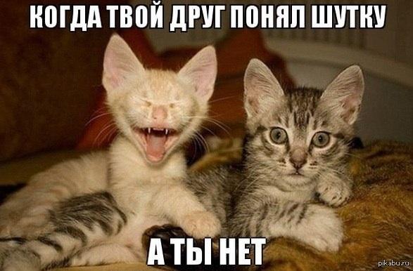 Смешные картинки котят с надписями 35 фото Прикольные
