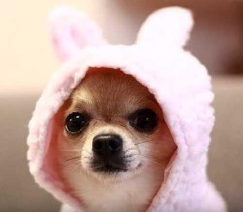 Картинки собачки (35 фото) 🔥 Прикольные картинки и юмор