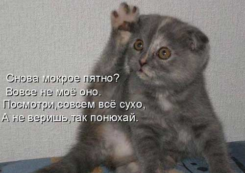 Прикольные фото котов с надписями (35 фото) • Прикольные ...