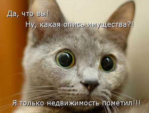 Смешные картинки с надписями до слез (35 фото ...