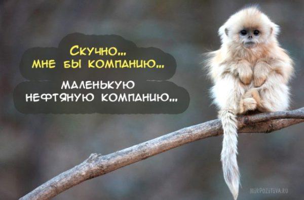 Смешные картинки для поднятия настроения (38 фото ...