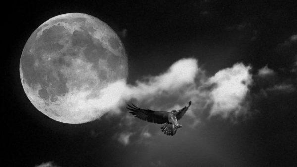 Красивые черно-белые картинки на рабочий стол (35 фото ...