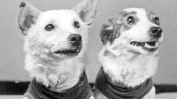 Фото собак Белка и Стрелка (11 фото) • Прикольные картинки ...