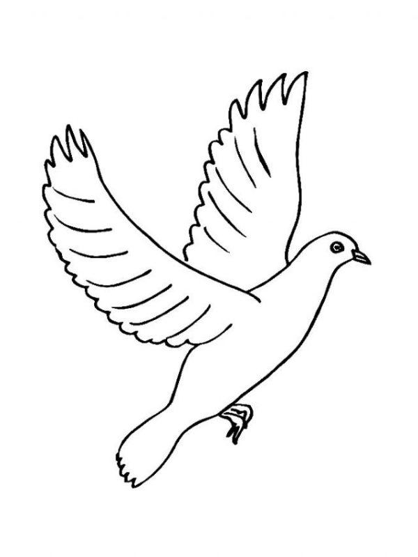 Рисунки карандашом летящая птица (30 фото) 🔥 Прикольные ...
